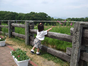 20070727hitsuji1